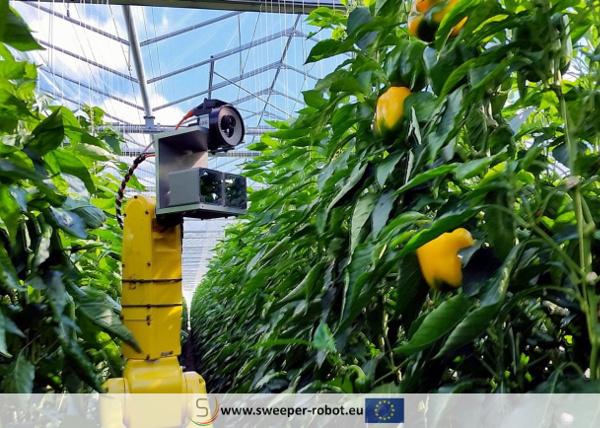 パプリカ収穫ロボット1