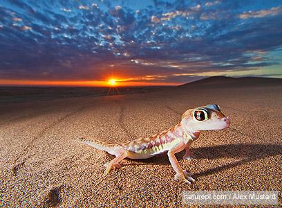 תוצאת תמונה עבור שממית במדבר