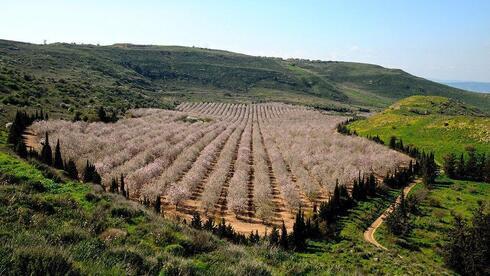 Altos del Golan.
