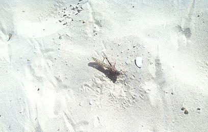 על החול באשדוד (צילום: ריטה גולדשטיין)