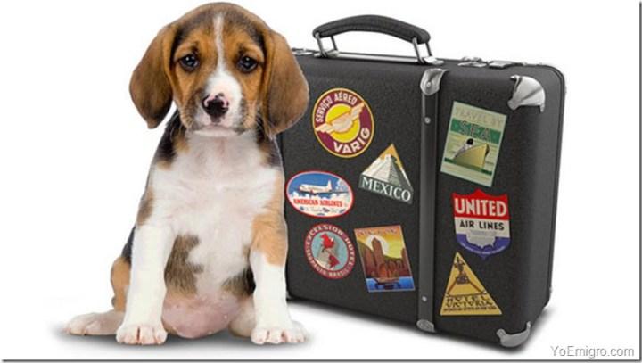 mascota-maleta-perro-emigrar