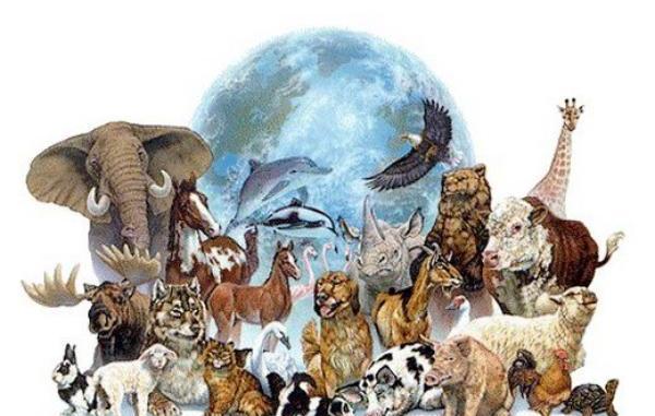 Resultado de imagen de animales de poder