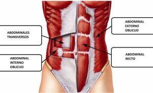 abdomen-transverso