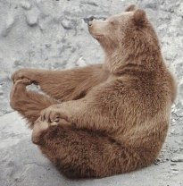 ours-yoga