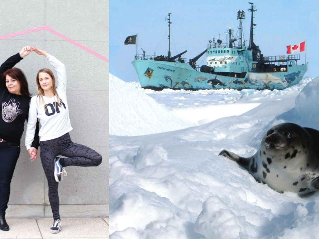 Yogablog Spenden für Citizen2be und Sea Shepherd