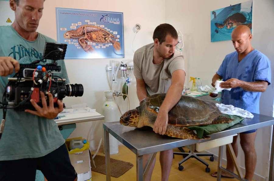 A Plastic Ocean Hilfe für Schildkroeten