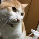 猫の強烈なオシッコ臭を安全にスッキリ消す方法!