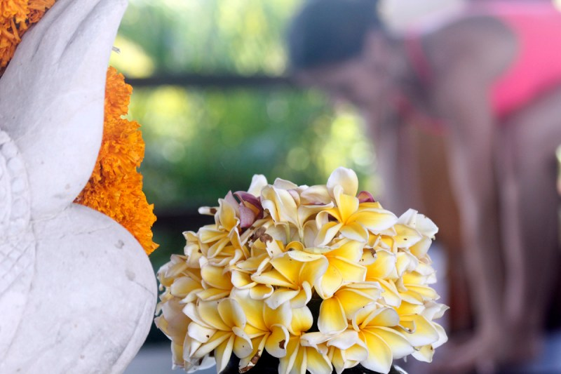 frangipani or plumeria, they smell divine