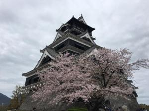 熊本城の桜
