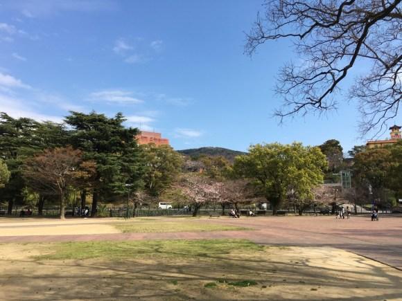 長崎平和公園の桜