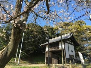 名島門の桜
