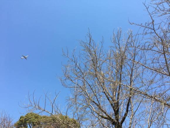 福岡城址より上空を。飛行機が通り過ぎる