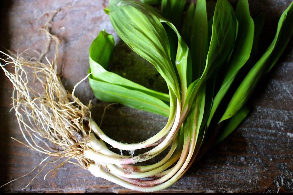 アメリカ天然野菜「Ramp・ランプ」