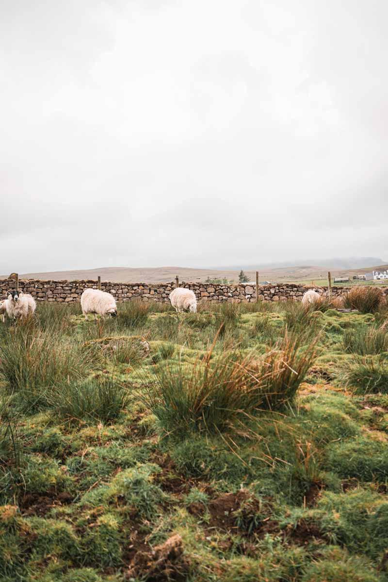 İskoçya Highland gezi rehberi