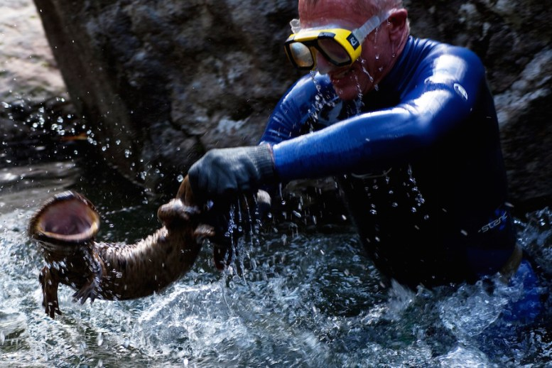 Jeremy grappling with salamander in Kamo River.