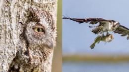 paukščių fotografijos