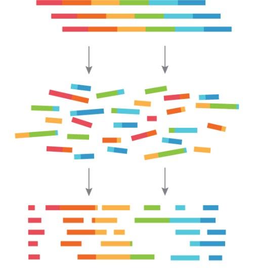 23andMevsNavigenics