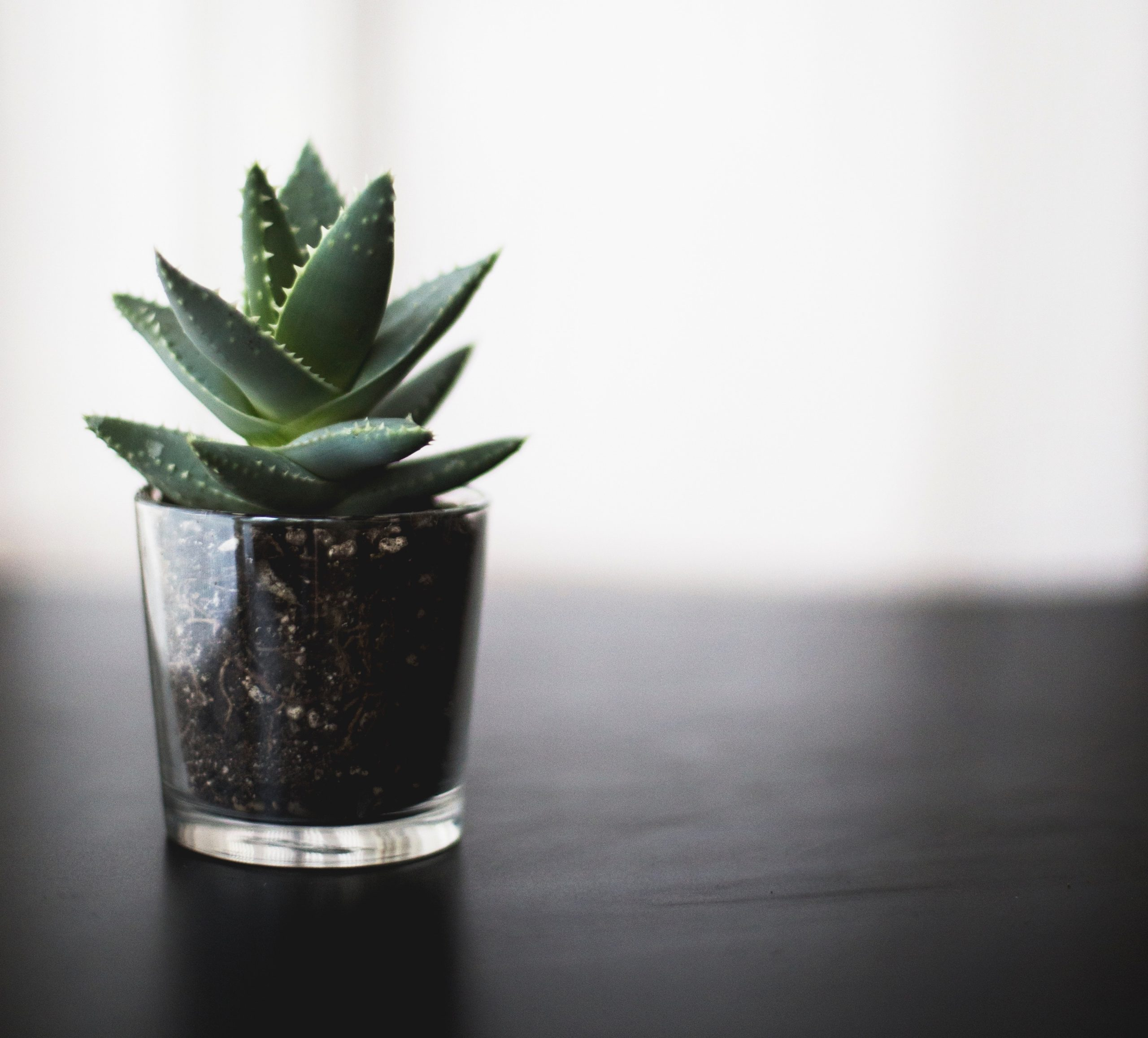 A tall & narrow green succulent potted in dark brown soil and a clear glass pot sitting on a neutral black tabletop with a white background.