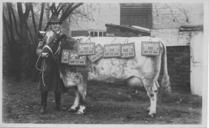 George Bargh and prize-winning cow (from Mr Seel's Garden project website)