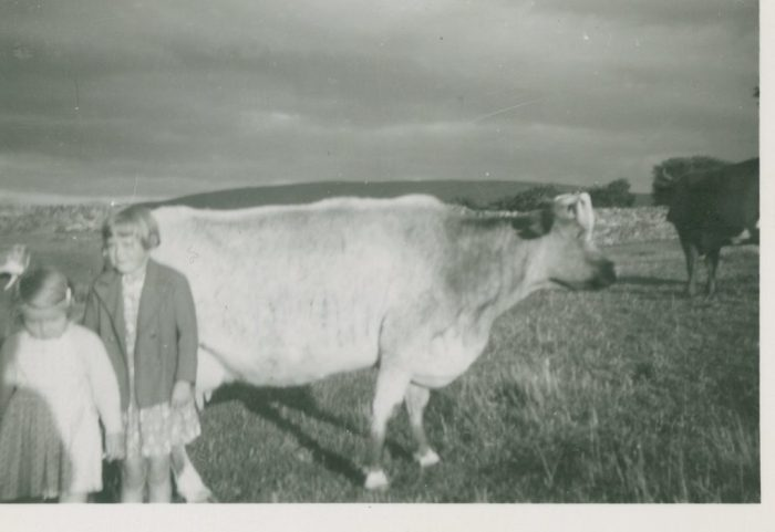 A young Edith Heseltine and her sister Mary with a cow at their Aysgarth farm in the 1950s. Courtesy of Edith Pratt