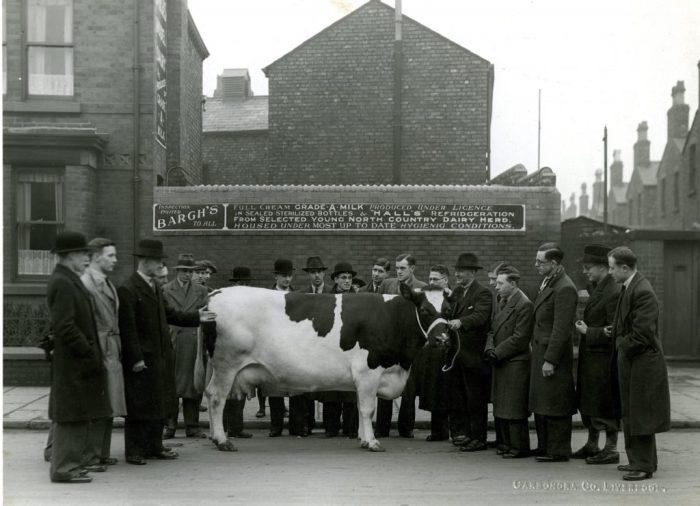 George Bargh's dairy, 134 Carisbrooke Road, Walton, Liverpool c1938