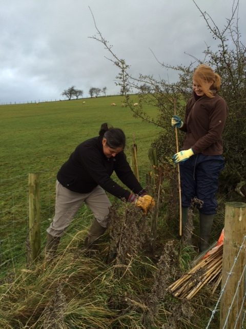 Staff getting hands-on and planting a mixture of saplings for the new part of the hedgerow