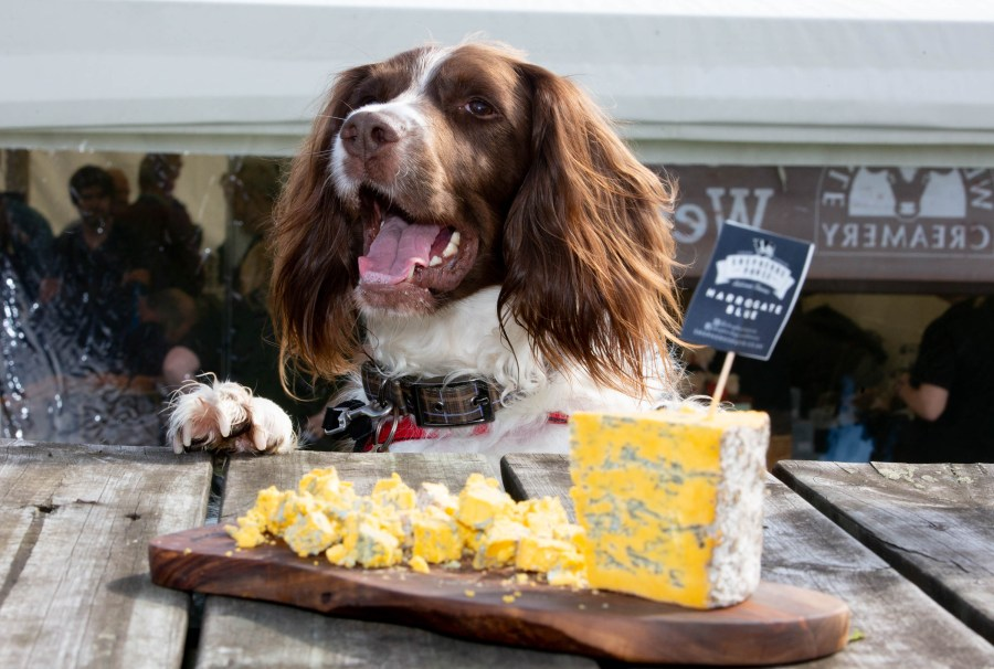 Dog enjoying cheese