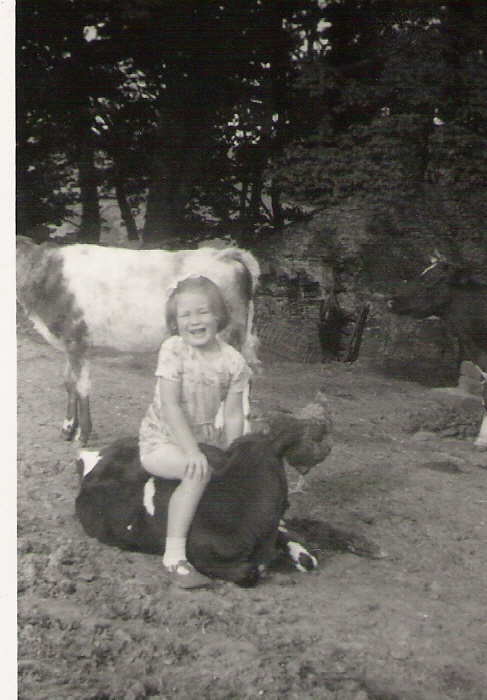 Playing with calves Joanne and Roundy. Nell Bank Farm, Walden late 1950s. Courtesy of Sally Stone