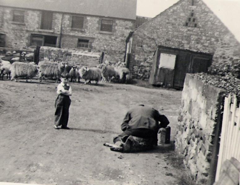 Ian Spensley 'helping' round the farm, early 1960s. Courtesy of Ian Spensley