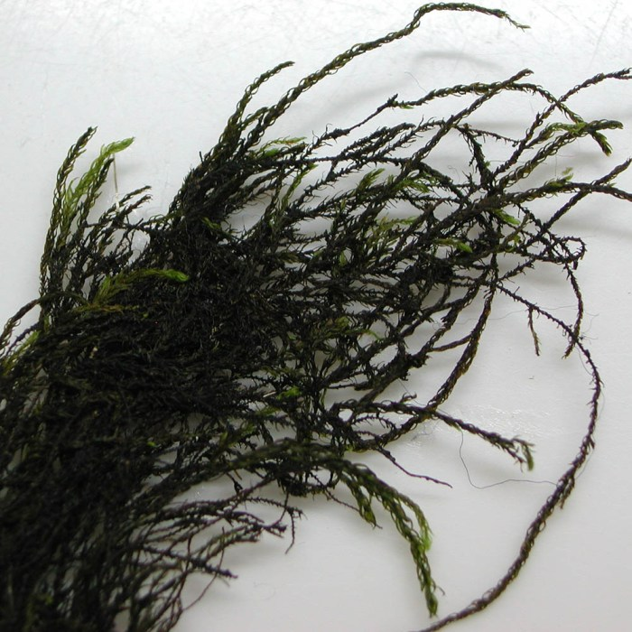 yorkshire-feather-moss