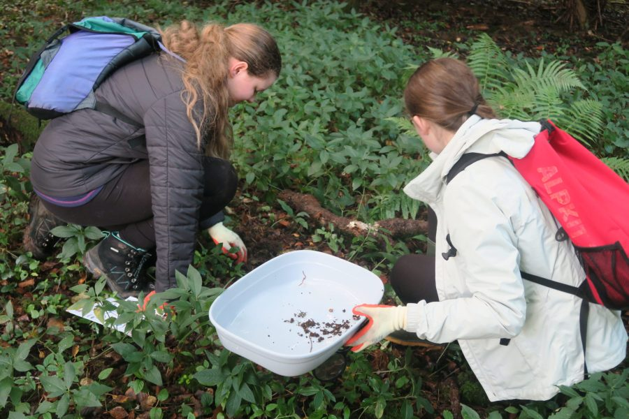 Young Rangers examining leaf litter in order to study the insects and minibeasts amongst it.