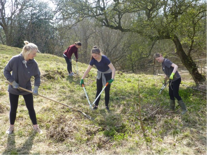 Young Rangers carrying out meadow maintenance work near Aysgarth Falls