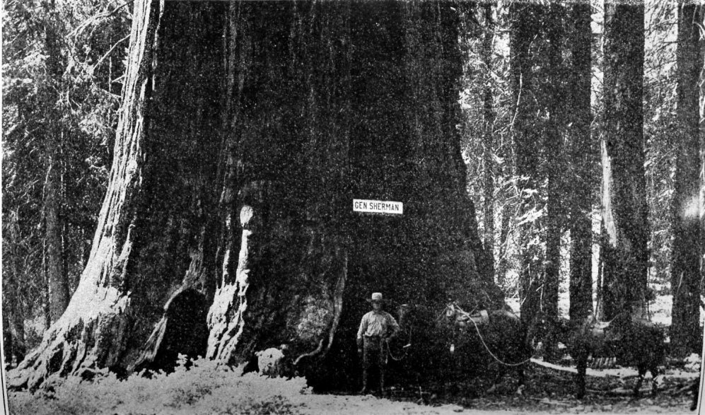 https://i1.wp.com/www.yosemite.ca.us/library/big_trees_of_california/images/sherman_tree.jpg