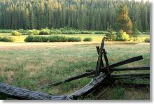 Wawona Meadow