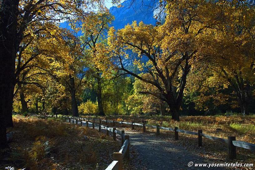 Autumn Path *