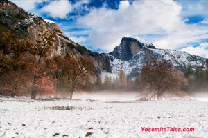 Half Dome with Elm in Winter