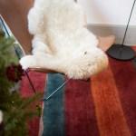 シルクロード手織絨毯展スライド2