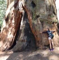 SequoiaGrand Sherman tree