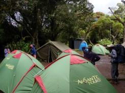 Big Tree Campsite
