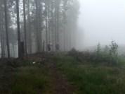 Mist Fog Forest Trailrun