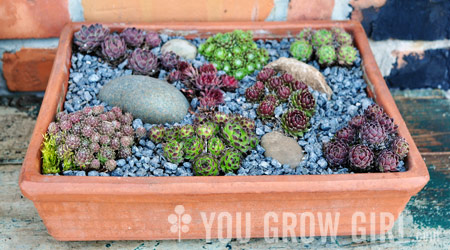You Grow Girl Planting A Sempervivum Trough