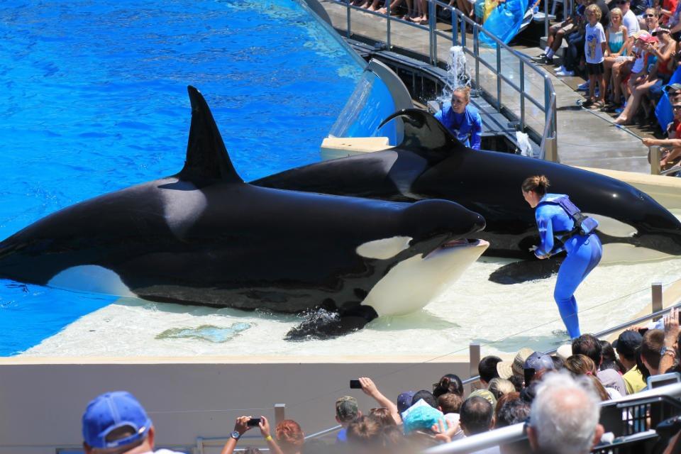圣地亚哥海洋世界 SeaWorld San Diego