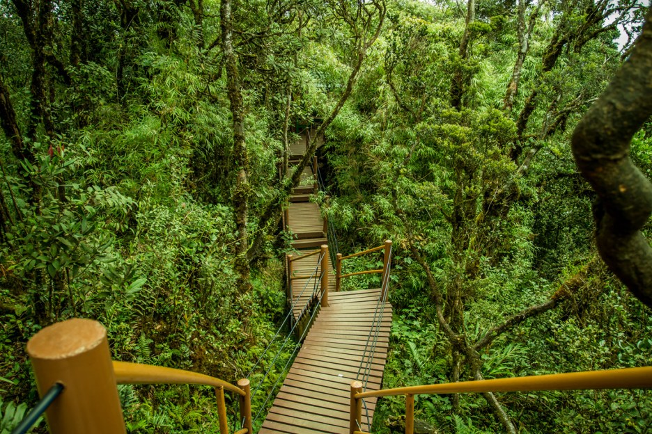 Image result for mossy forest bukit brinchang