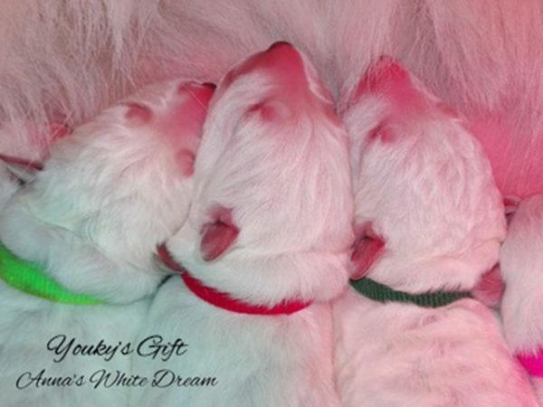 periodi sensibili cucciolo periodo neonatale