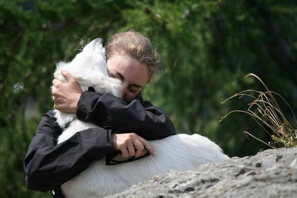 cuccioli pastore svizzero