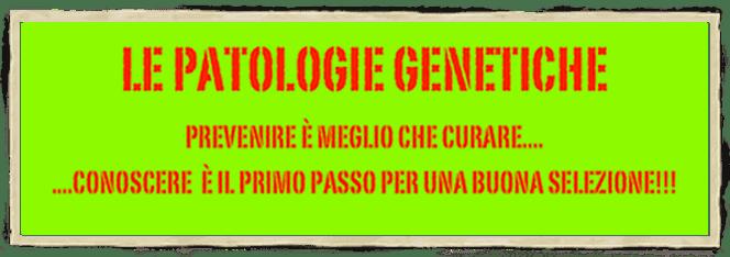 patologie genetiche pastore svizzero bianco cuccioli youky's gift