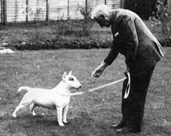 piazz 20 regole per allevare pastore svizzero bianco cuccioli youky's gift