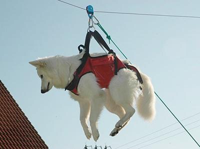 tempra doti caratteriali pastore svizzero bianco cuccioli youky's gift