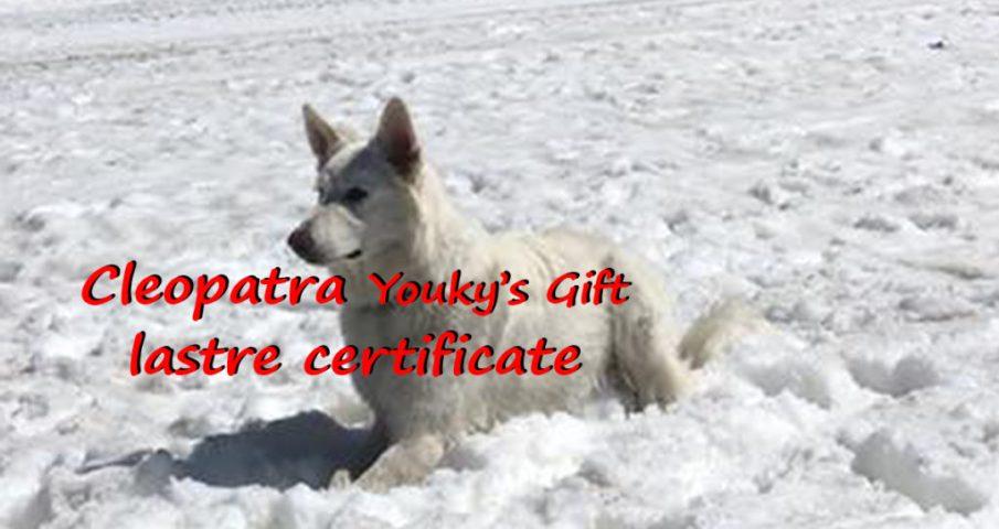 cleopatra pastore svizzero bianco cuccioli youky's gift lastre