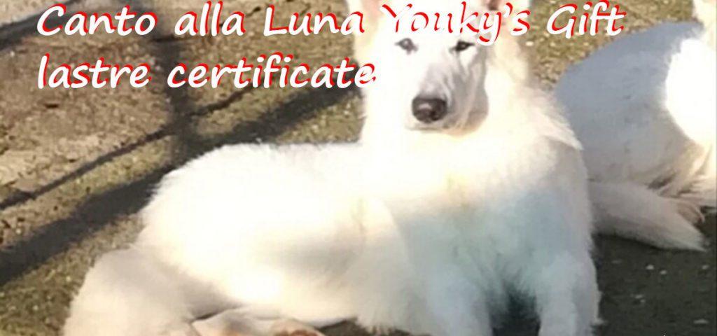 Canto lastre certificate pastore svizzero bianco cuccioli youky's gift
